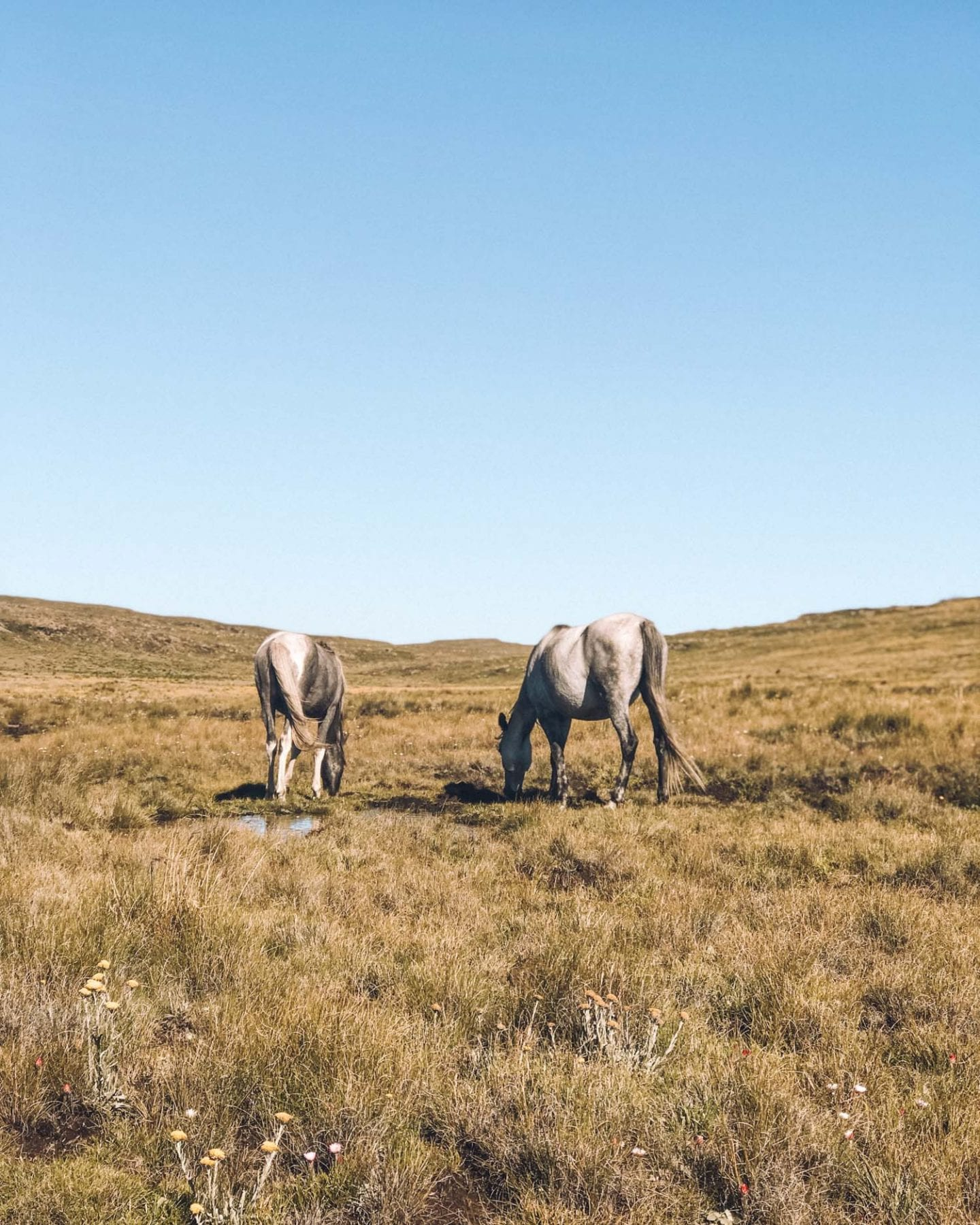 wild horses on top of tugela falls