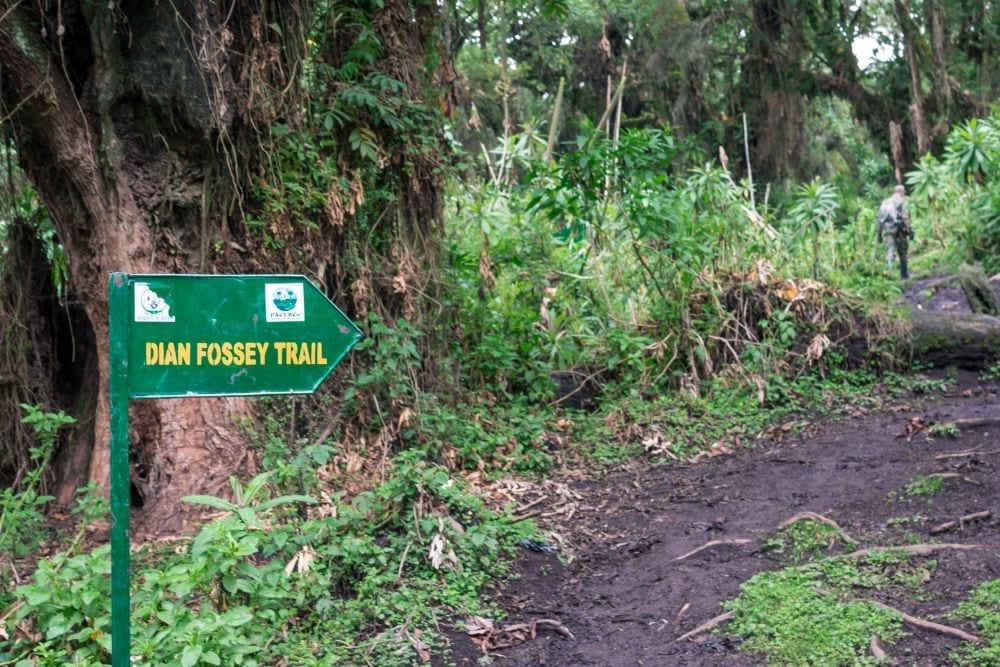 Everything You Need to Know about the Dian Fossey Hike