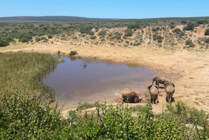 How to Visit Addo National Park: A Complete Self-Drive Safari Guide