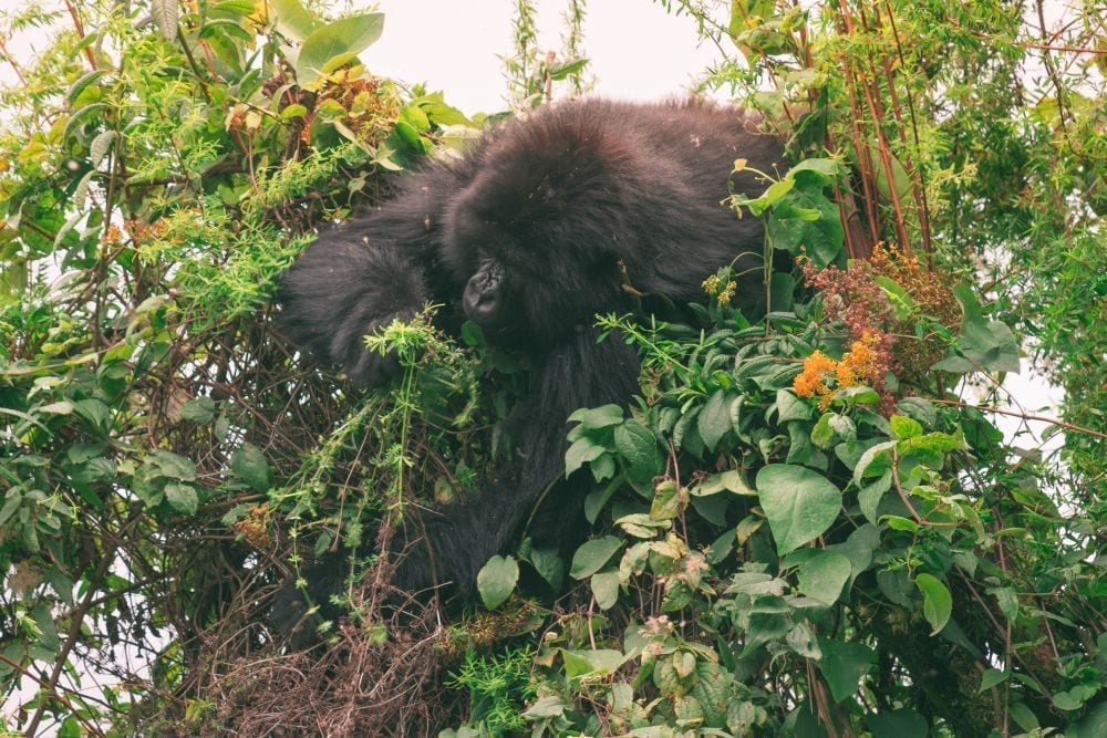 """Travel to Rwanda: 15 Useful Things to Know Before You Go 