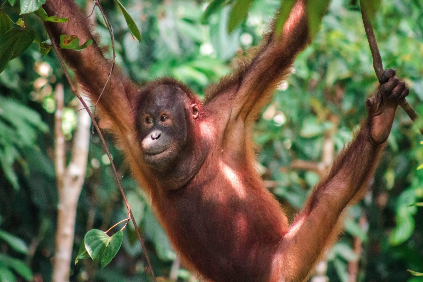 How to Backpack Sepilok, Borneo on a Budget | Wanderlust Movement | #malaysia #backpacking #borneo #budgettravel #wildlife