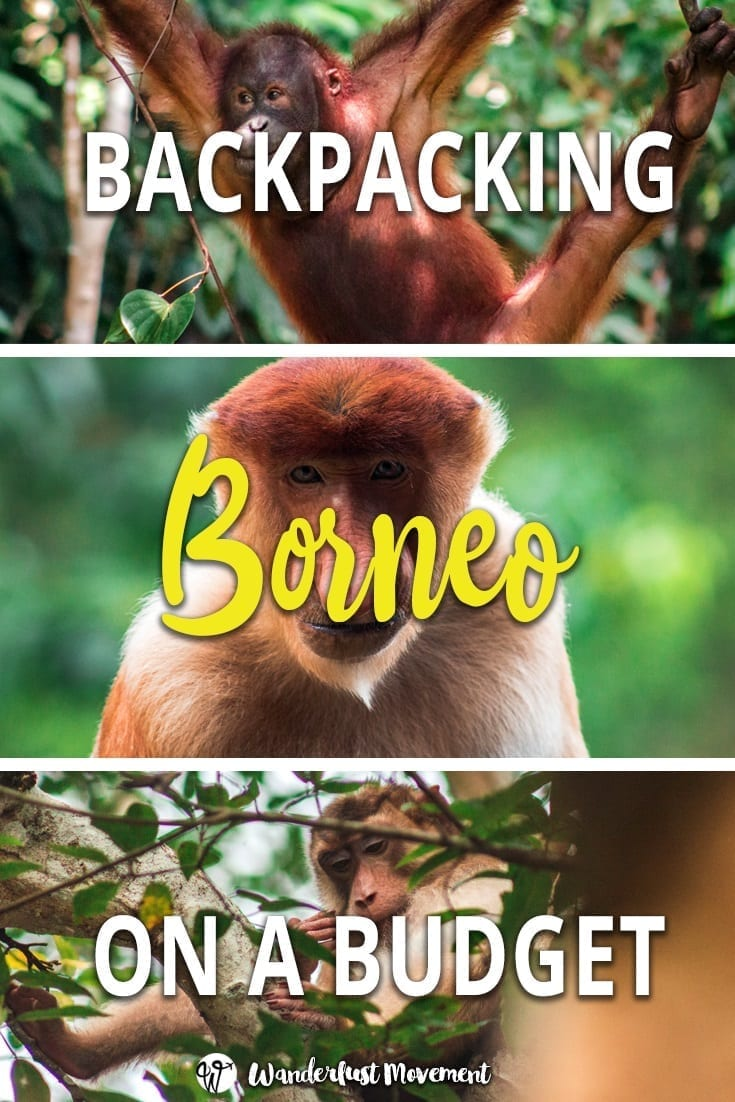 How to Backpack Sepilok, Borneo on a Budget