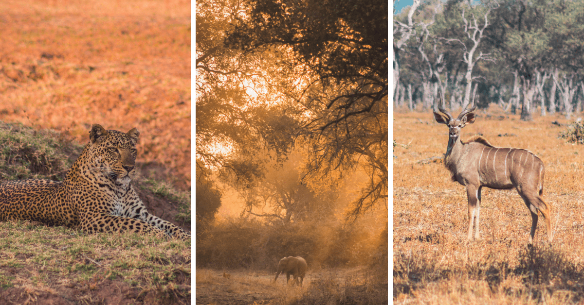 The Ultimate South Luangwa National Park Travel Guide