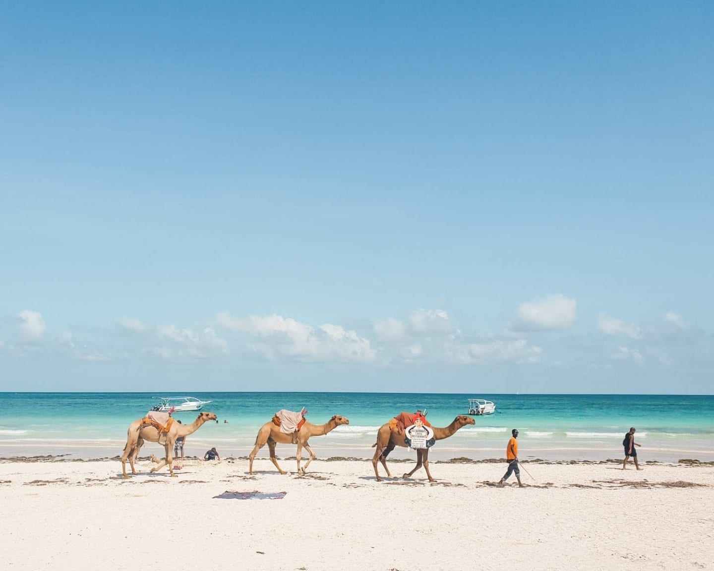 camels on diani beach