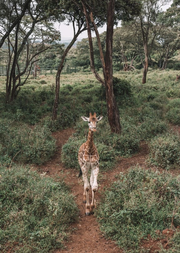 travel to kenya 15 things you need to know