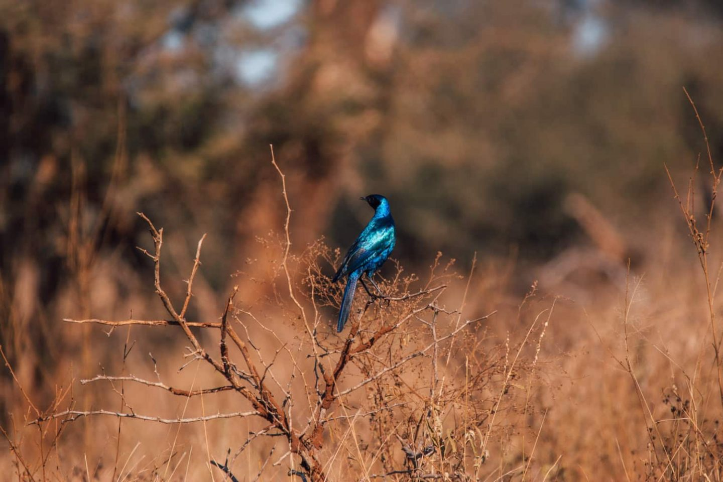 bird in kruger national park