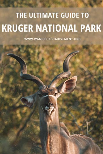 Kruger National Park is the best place to go on safari in South Africa. It's the biggest and oldest park in the country and it's home to the famous Big 5! This complete guide to Kruger National Park includes everything from how to get there, where to stay, what to pack and which loops are the best roads to see wildlife!
