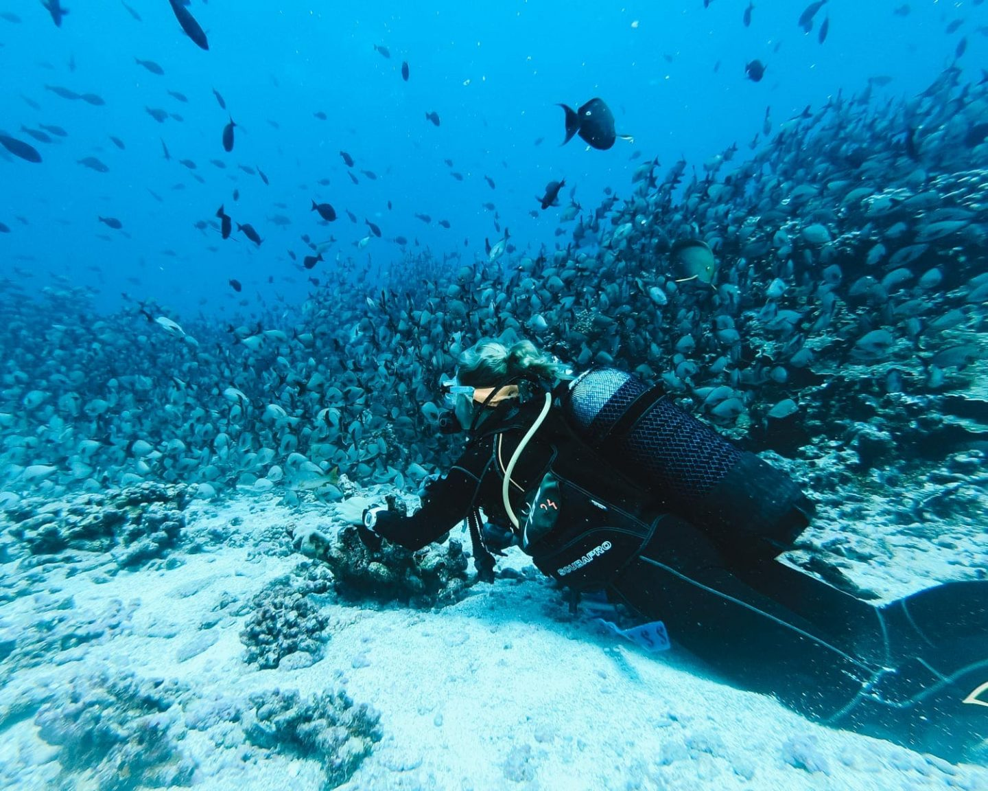 Go Scuba Diving in Sodwana Bay