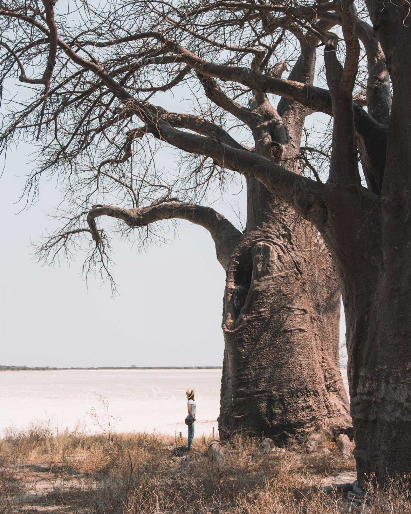 girl standing in front of baines baobabs