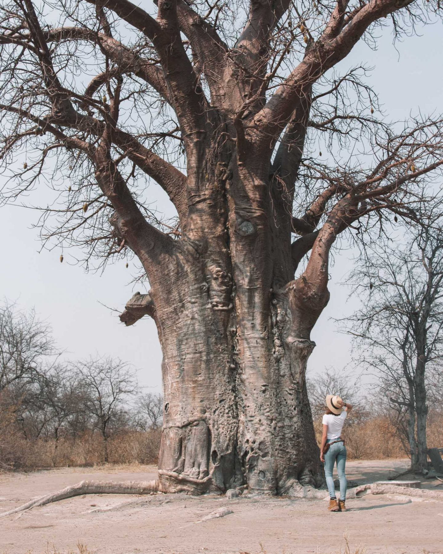 girl in front of baobab tree in botswana
