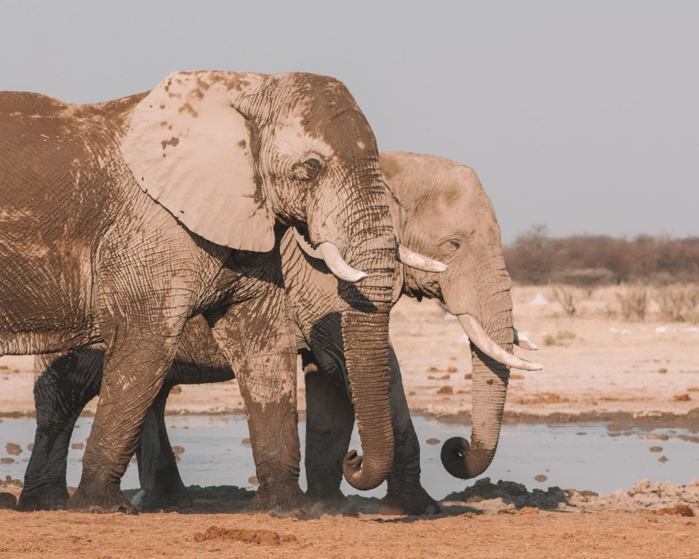 add nxai pan to your botswana itinerary and see elephants