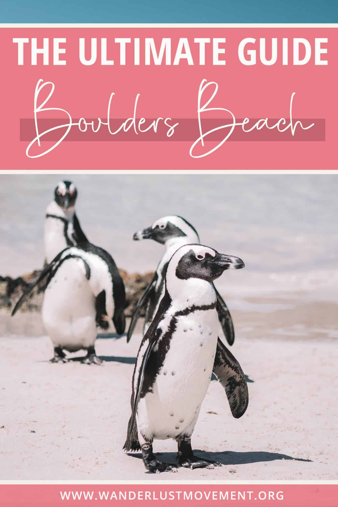 How to Swim With Penguins at Boulders Beach in Cape Town