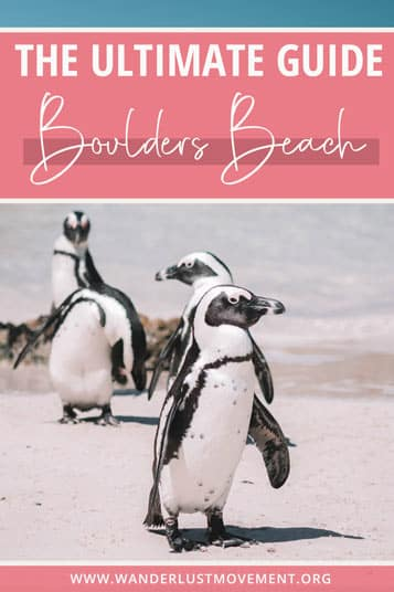 It's not every day that you can swim with wild penguins. Here's everything you need to know about visiting Boulders Beach in Cape Town!