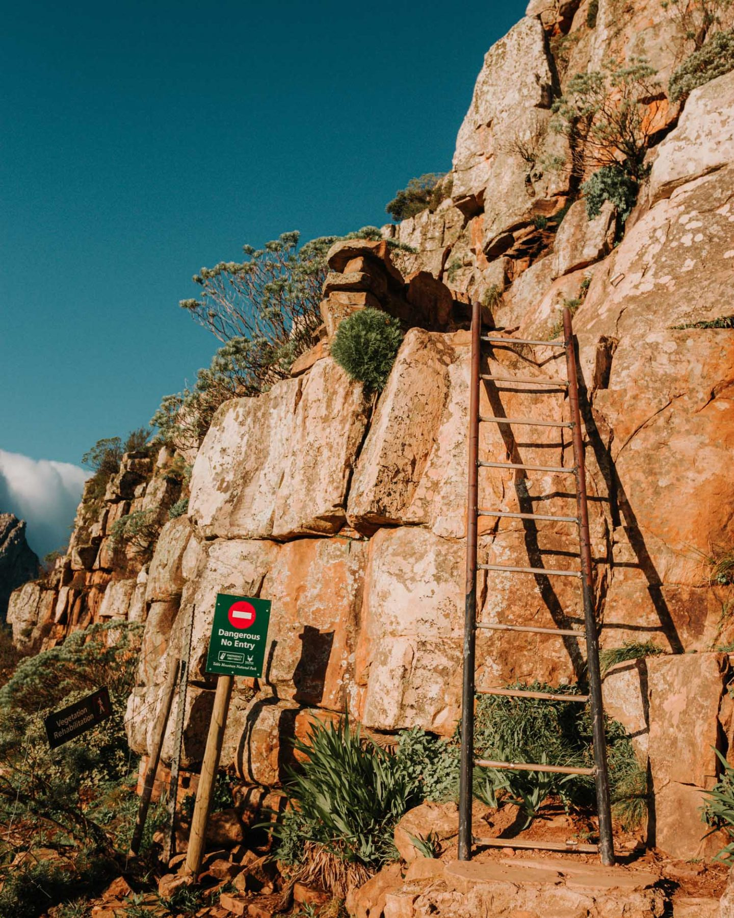 ladder on lion's head
