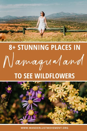 Got flowers? Namaqualand has plenty! Here's a complete guide to all the best places to see the Namaqualand flowers in South Africa.