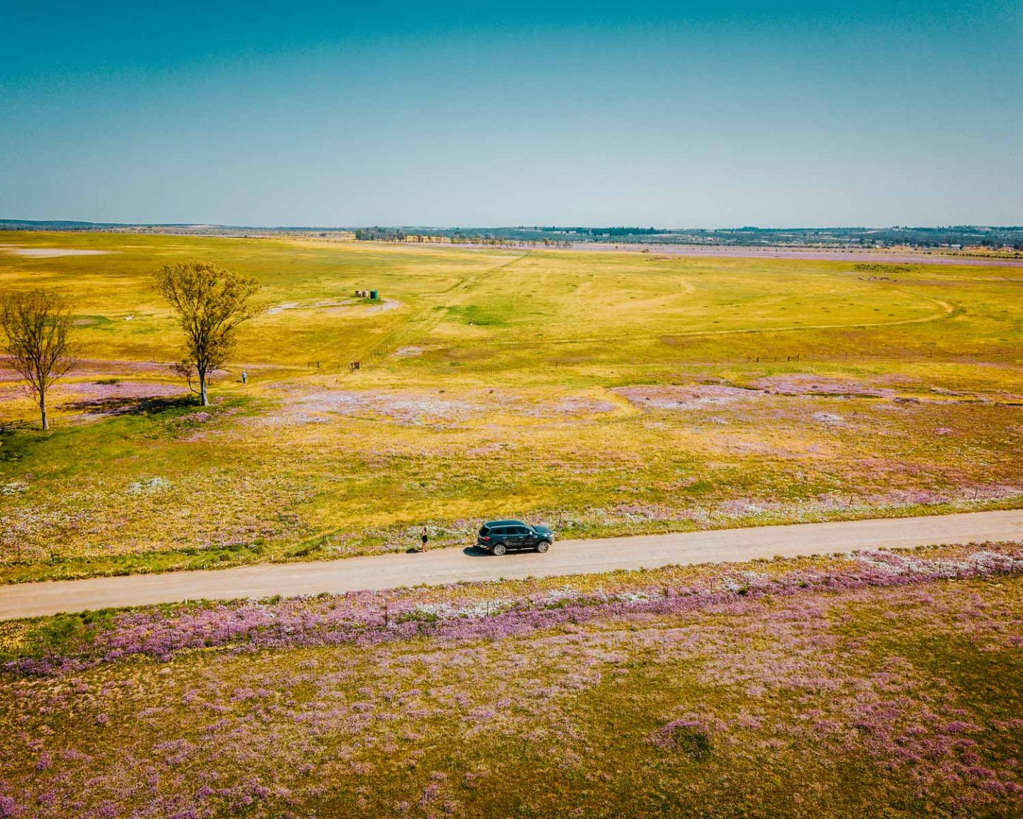 wildflowers drone shot